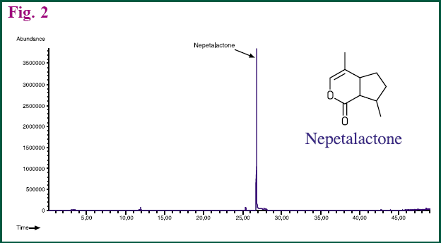 Figure 2 - GC chromatogram of Nepetalactone in lead stem