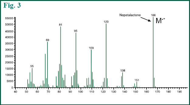 Figure 3 - MS spectrum of Nepetalactone in lead stem