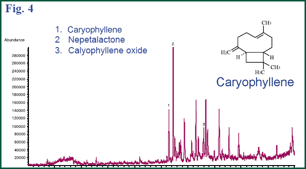 Figure 4 - GC chromatogram of catnip seeds