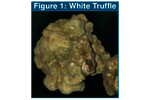 Note 98: Flavor and Aroma Profiles of Truffle Oils by Thermal Desorption GC/MS